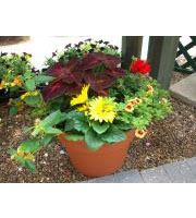 Outdoor Blooming Patio Pot