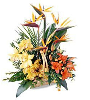 Exotic Basket Arrangement