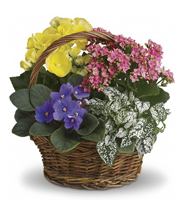 Teleflora`s Spring Has Sprung Mixed Basket