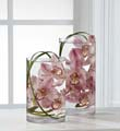 The FTD� Tranquil� Orchid Arrangement
