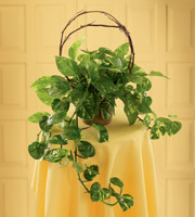 The FTD� Under the Vine� Planter