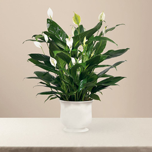 The FTD� Comfort Planter