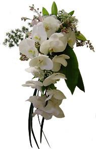 Apple Blossom Florist, Winter Park, Fl  32792