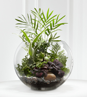 The FTD� Woodland Greens� Terrarium