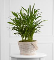 The FTD� Deeply Adored� Palm Planter