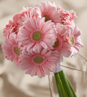 The FTD� Daisy Delight� Bouquet