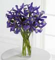 The FTD� Iris Riches� Bouquet