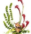 The FTD� Touch of Tropics� Arrangement