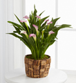 The FTD� Calla Lily Planter