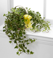 The FTD� Solace� Ivy Planter