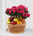The FTD� Encircling Grace� Fruit & Plant Basket